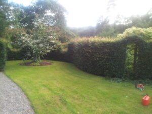 Garden with lawn and hedge