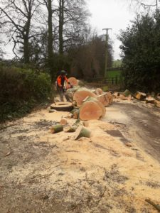 Beech tree removal - cleaning up!